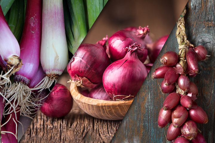 Tropea onion and spring onion: characteristics and differences