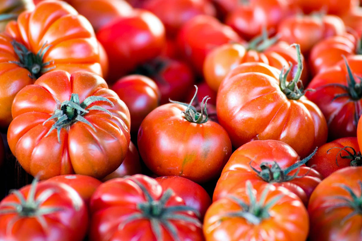 Tomatoes from Belmonte: all about the Calabrian vegetable