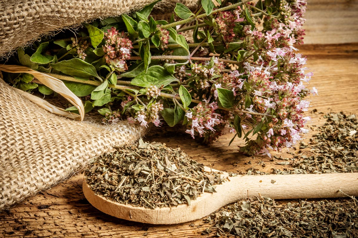 Wild oregano: scents and flavours of Calabria