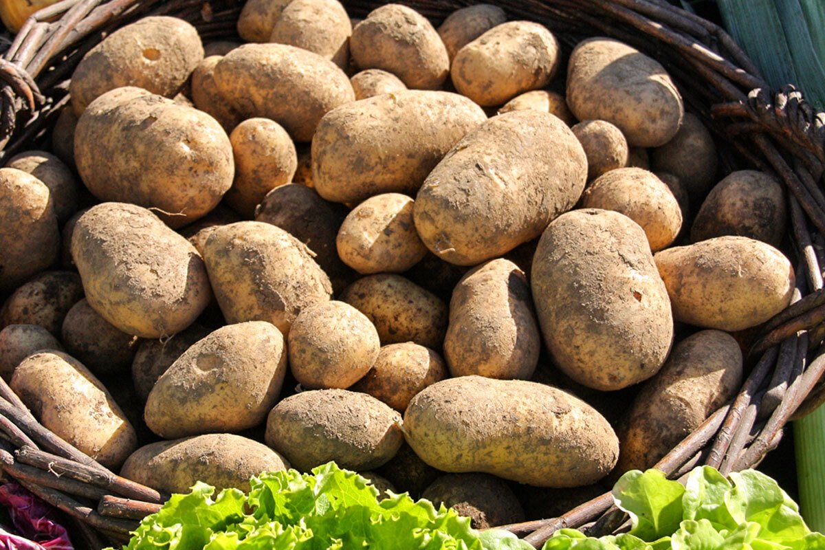 Potatoes from Sila PGI: history and ways of cooking them