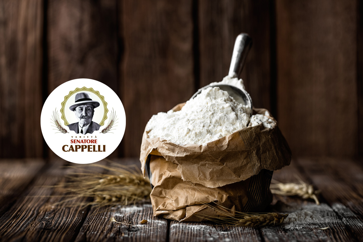 Senatore Cappelli: the wheat with beneficial effects