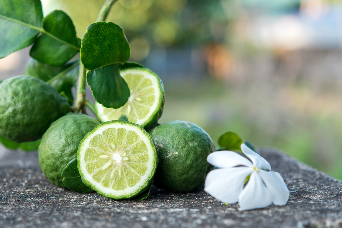 Bergamot from Reggio Calabria: history and features